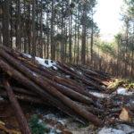 林業体験してみませんか?